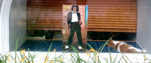 My street is not stopping until it gets enough of MJ. Neither is the cat that's cuddling up with the Off the Wall album