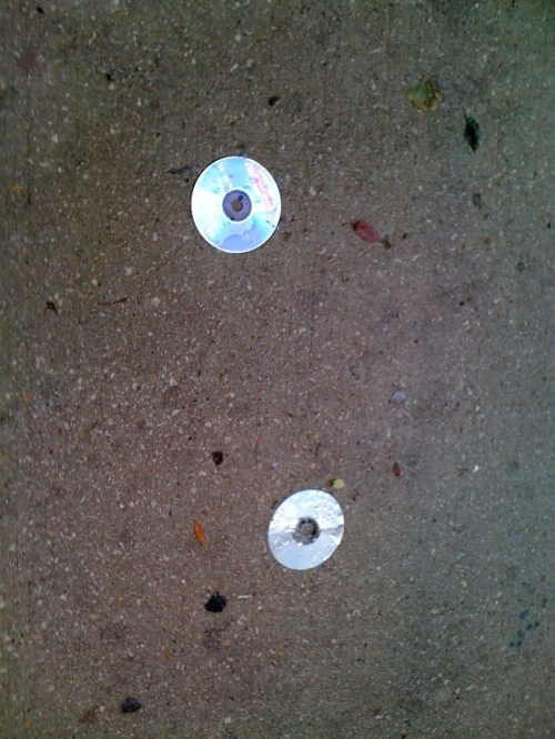 Two discs spilling out near the street